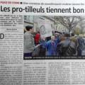 Chartres - Place du Cygne - Les pro-tilleuls tiennent bon